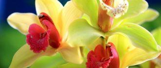 Орхидеи изображение