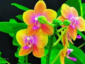 Орхидея выращивание