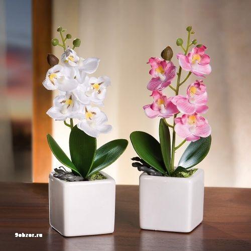 Как выращивать орхидею в домашних условиях