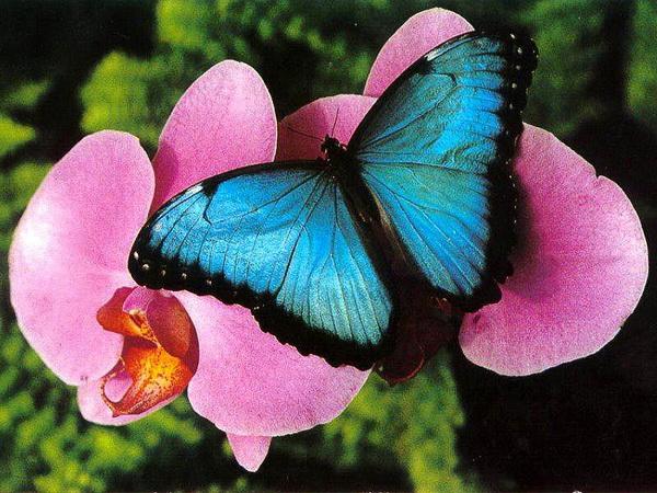 откуда берутся бабочки в животе
