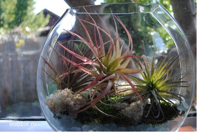воздушные растения в террариуме