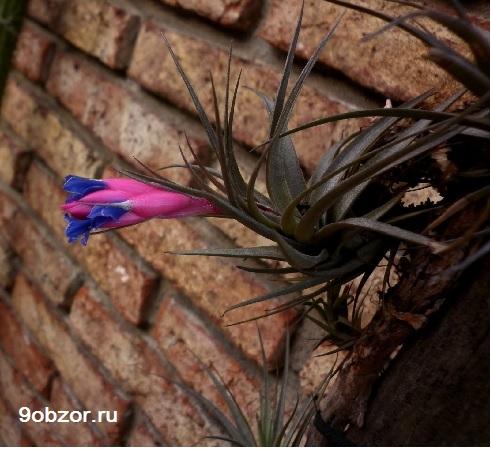воздушное растение на камне