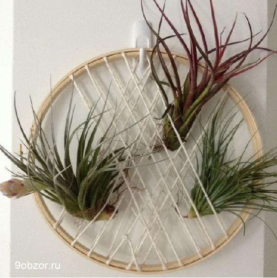 растение на проволке
