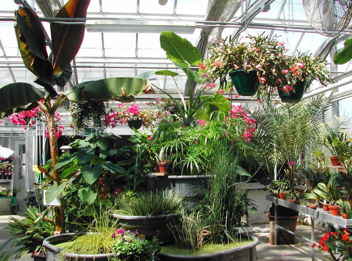 экзотические растения дома