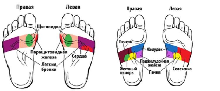 tochki-na-stope-otvechayuschie-za-organy-dlya-massazha