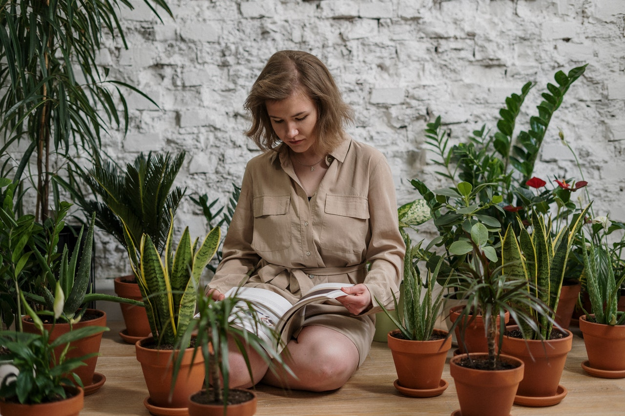 экзотические растения для дома