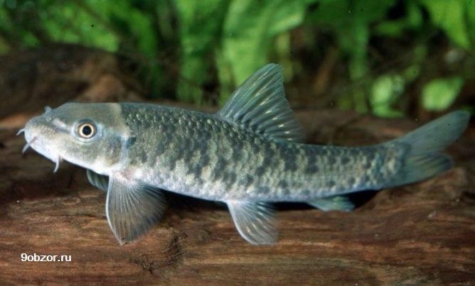 массаж рыбками для ног польза