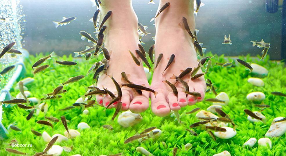 массаж ног рыбками
